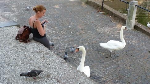 The friendliest of friendly swans Den Haag, The Netherlands   July 29, 2014