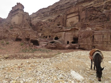 A horse looks for food near Obelisk Tomb and the Triclinium in Petra - by Anika Mikkelson - Miss Maps - www.MissMaps.com