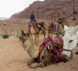 Donkeys and Camels lay down for a rest after a long day in Petra - by Anika Mikkelson - Miss Maps - www.MissMaps.com