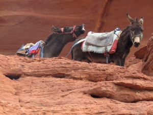 I may or may not have caught two donkeys in the act in Petra...but am keeping this PG - by Anika Mikkelson - Miss Maps - www.MissMaps.com