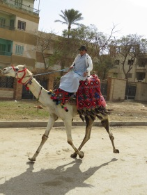 Riding in Style - A man and his camel in Giza, Egypt - by Anika Mikkelson - Miss Maps