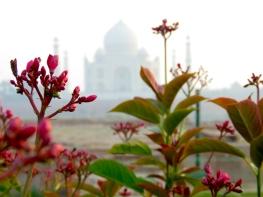 Taj Mahal from Afar - December 2014