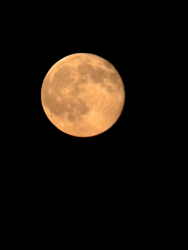 Full Moon in Black and Gold