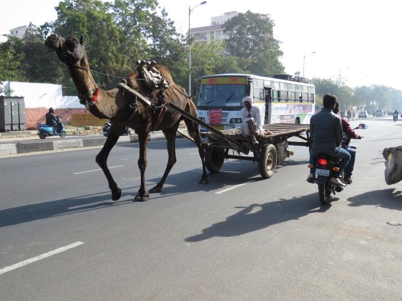 Public Transportation - Jaipur India