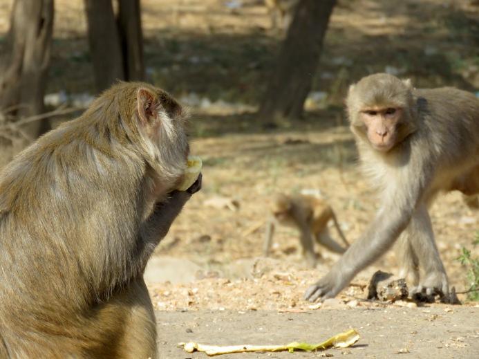 Hanuman - New Delhi, India