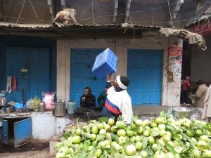 Monkey Business - Varanasi, India