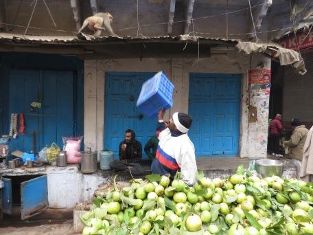 Monkey Business - Varanasi, India - by Anika Mikkelson - Miss Maps