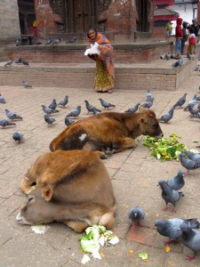 A homeless woman feeds Holy Cows at Durbar Square - Kathmandu, Nepal. Read her story at www.beautifulfillment.com