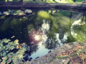 Dracula's Dreamy Reflection - Anika Mikkelson www.MissMaps.com