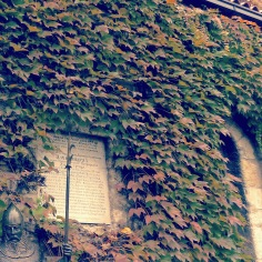 Fall's Protector - Belgrade, Serbia