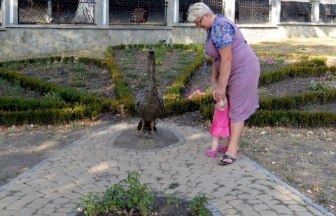 Pretty in Pink Peacocks - Kamianets-Podilskyi, Ukraine - Photo by Anika Mikkelson, MissMaps.com