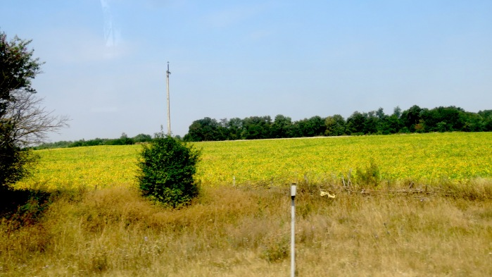 Ukrainian Flag of Sunflowers and Blue Skies Ukraine - Anika Mikkelson - www.MissMaps.com