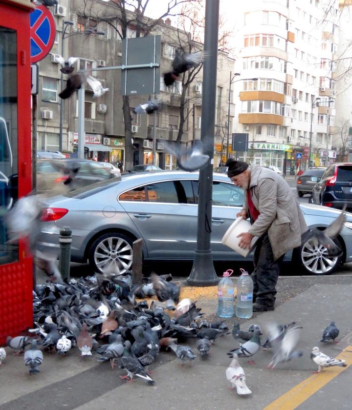 Feeding the birds - Bucharest Romania - by Anika Mikkelson - Miss Maps - www.MissMaps.com