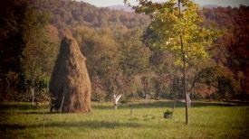 Fields of Miron Monastery, Romania - by Anika Mikkelson - Miss Maps - www.MissMaps.com