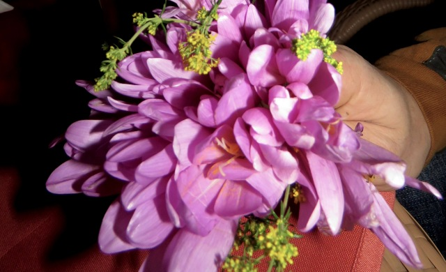 The first flowers I've received in a very long time - Chivalry's not dead in Sibiu! by Anika Mikkelson MissMaps.com