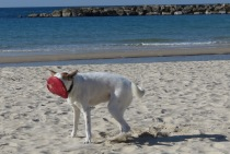 Caught it! Puppy Dog and the Frisbee - Tel Aviv Israel - by Anika Mikkelson - Miss Maps - www.MissMaps.com