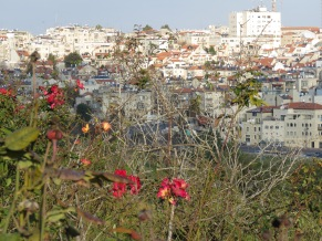 Jerusalem Homes as seen from Wohl Rose Park - by Anika Mikkelson - Miss Maps - www.MissMaps.com