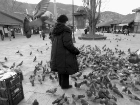 Bird Lady - Sarajevo, Bosnia and Herzegovina BiH - by Anika Mikkelson - Miss Maps - www.MissMaps.com copy