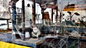 Cafe Cat at Trip'n Hostel - Shkoder Albania - by Anika Mikkelson - Miss Maps - www.MissMaps.com