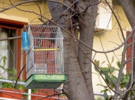 Caged Bird so close to freedom - Shkoder Albania - by Anika Mikkelson - Miss Maps - www.MissMaps.com