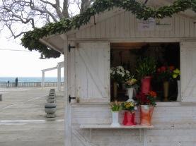 Flowers for sale - Dubrovnik, Croatia - by Anika Mikkelson - Miss Maps - www.MissMaps.com