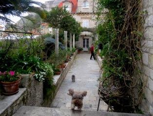 Super Dog caming flying at me- so ferocious! Dubrovnik Croatia - by Anika Mikkelson - Miss Maps - www.MissMaps.com