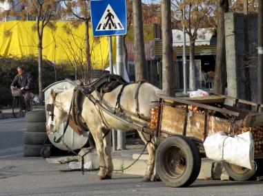 Transportation Station - Shkoder Albania - by Anika Mikkelson - Miss Maps - www.MissMaps.com