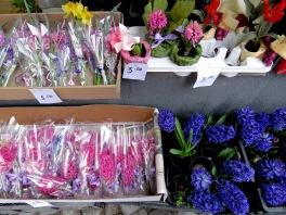 Flowers for International Women's Day - Plovdiv, Bulgaria - by Anika Mikkelson - Miss Maps