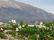 Petit Fluer At Gjirokaster's Fortress - Gjirokaster Albania - by Anika Mikkelson - Miss Maps - www.MissMaps.com