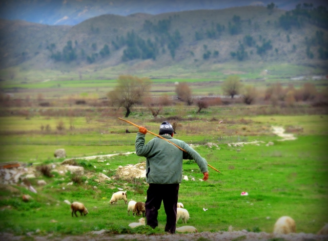Shepherd with His Sheep - Gjirokaster Albania - by Anika Mikkelson - Miss Maps - www.MissMaps.com
