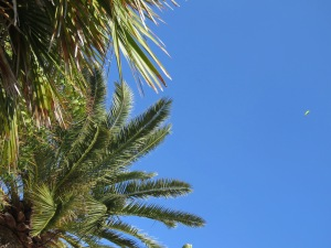 A lone paraglider high above the trees - Monaco - by Anika Mikkelson - MissMaps.com