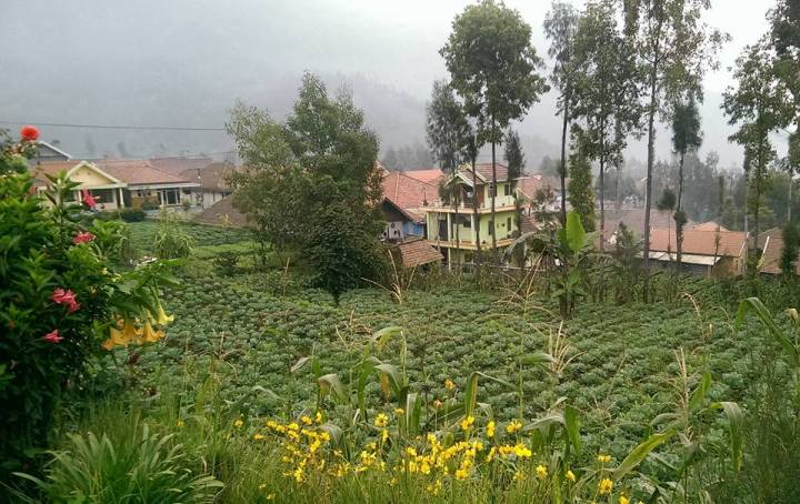 East Java by Rachel of The Imagination Trail - Miss Maps Featured Female Traveler