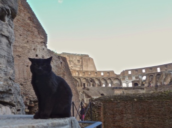 One of Rome's many many cats at the Colosseum in Rome Italy - by Anika Mikkelson - Miss Maps - www.MissMaps.com