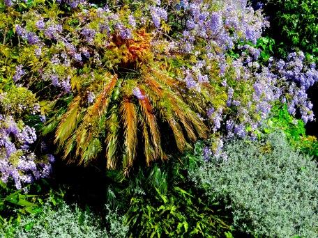 Perfect Plants - Italian Riviera - by Anika Mikkelson - Miss Maps - www.MissMaps.com