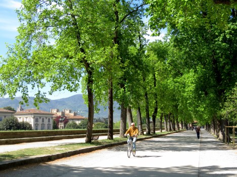 The city park built on old town's walls - Lucca Italy - by Anika Mikkelson - Miss Maps - www.MissMaps.com