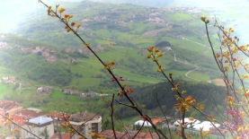Blossoms in San Marino - by Anika Mikkelson - Miss Maps - www.MissMaps.com