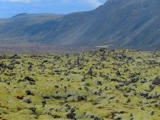 Fields of Green - Iceland - by Anika Mikkelson - Miss Maps - www.MissMaps.com