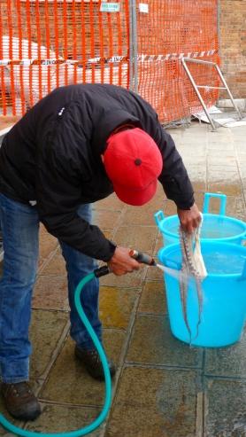 Fresh Octopus - Venice Italy - by Anika Mikkelson - Miss Maps - www.MissMaps.com