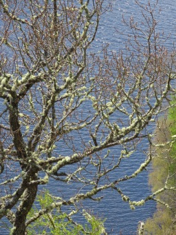 Fuzzy Trees in brilliant colors at Queen's View Scotland - by Anika Mikkelson - Miss Maps - www.MissMaps.com