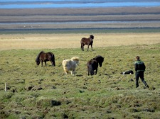 Horse Sweaters and Horse Catchers - Iceland - by Anika Mikkelson - Miss Maps - www.MissMaps.com