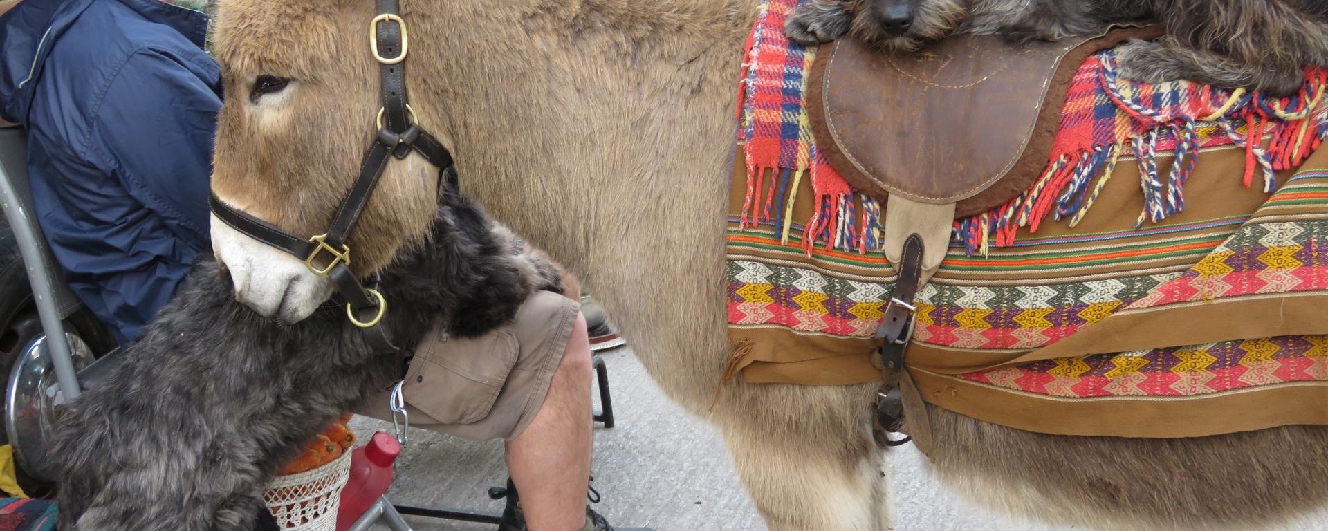 Pups and Donkeys Taking a Rest - Dingle Ireland - by Anika Mikkelson - Miss Maps - www.MissMaps.com