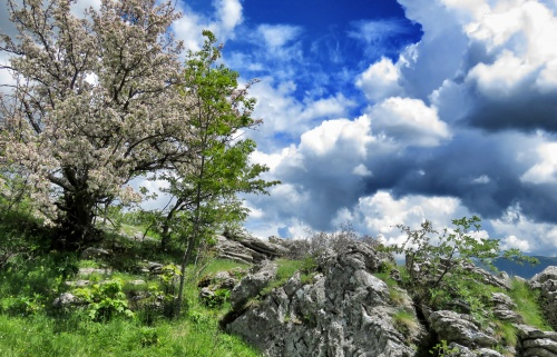 Blossoming Trees along our hiking trail near Lukomir - Bosnia and Herzegovina - BiH - by Anika Mikkelson - Miss Maps - www.MissMaps.com