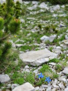 Blue Flowers in a sea of Green - Bosnia and Herzegovina BiH - by Anika MIkkelson - Miss Maps - www.MissMaps.com