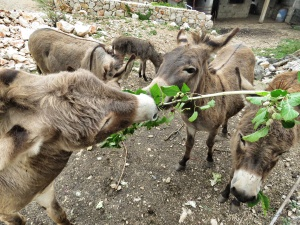 Donkey Feeding time at Marica Gaj - Bosnia and Herzegovina - by Anika Mikkelson - Miss Maps - www.MissMaps.com