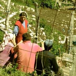 Farming in Lukomir Bosnia and Herzegovina - by Anika Mikkelson - Miss Maps - www.MissMaps.com