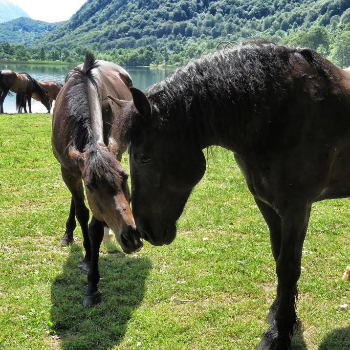 Horsey Eskimo Kisses at Boracko Lake - Bosnia and Herzegovina BiH - by Anika Mikkelson - Miss Maps - www.MissMaps.com