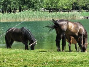 If you give a horse a pole - Bosnia and Herzegovina BiH - by Anika Mikkelson - Miss Maps - www.MissMaps.com