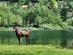 If you teach a horse to fish - Lake Boracko - Bosnia Herzegovina BiH - by Anika Mikkelson - Miss Maps - www.MissMaps.com