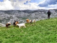 Mountain Goats and their shepherd - near Lukomir BiH - by Anika Mikkelson - Miss Maps - www.MissMaps.com