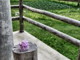 Picking Wildflowers- A new pastime - by Anika Mikkelson - Miss Maps - www.MissMaps.com